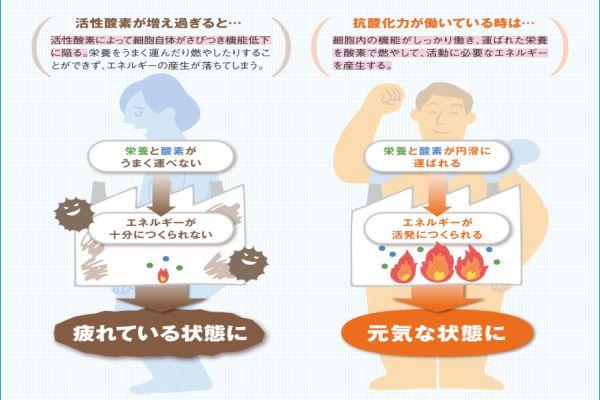 青汁・熊笹7