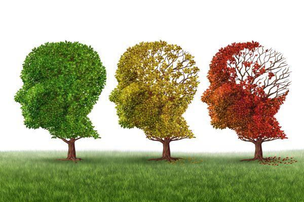青汁・認知症、アルツハイマー病予防2